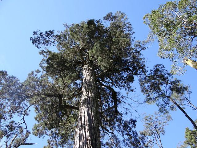 Monumento Natural Lahuen Ñadi