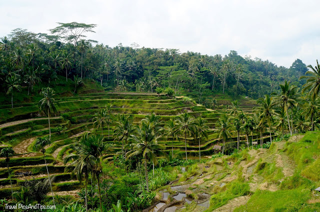 Rizières de Tegallalang à Bali en Indonésie