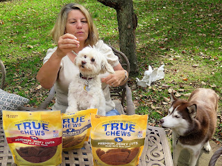 Noise is the enemy of video, especially outdoor video!  We had a lot of challenges trying to film a dog treat video for my blog!        Blogging tips, creating video for a blog and social media channels.