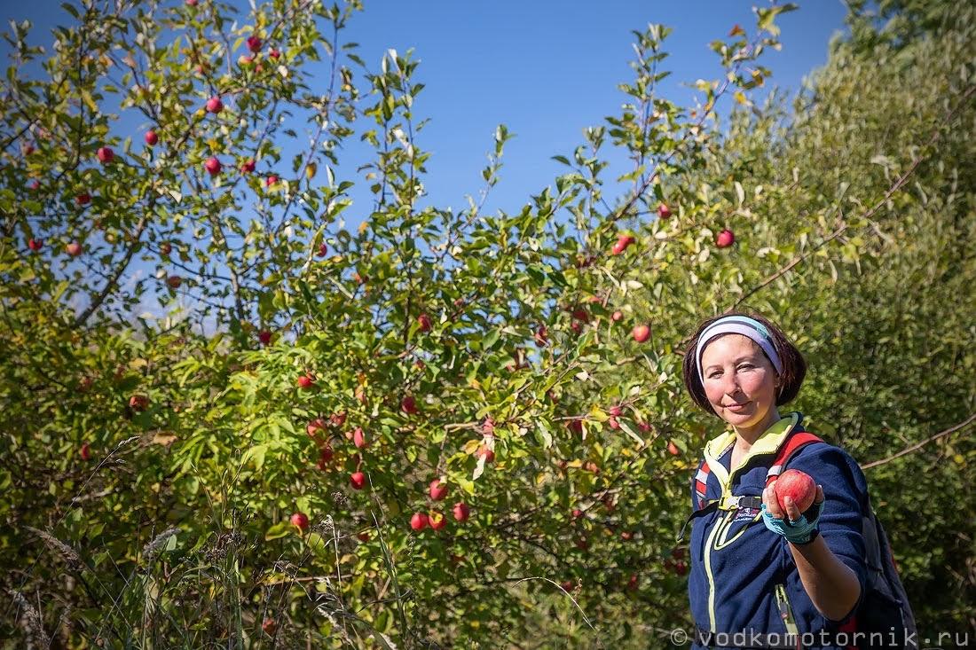 Дорога через яблоневые сады