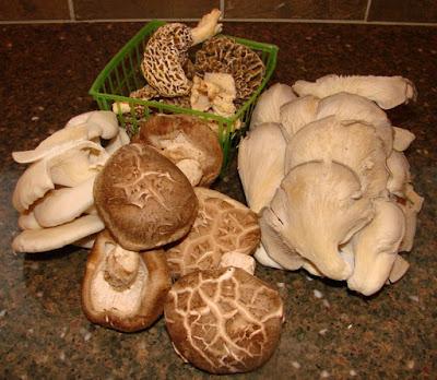 Mushroom Supplier Company in Patna