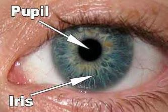 Macam-macam Kelainan Pupil Mata Yang Harus Dikenali