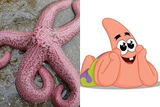 Patrick Star adalah Bintang Laut Merah Muda Raksasa