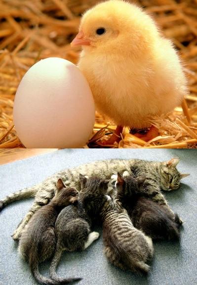 Apa ciri-ciri hewan bertelur dengan hewan beranak?