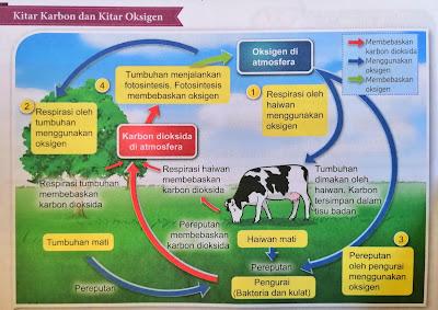 kitar karbon dan kitar oksigen adalah saling berhubung