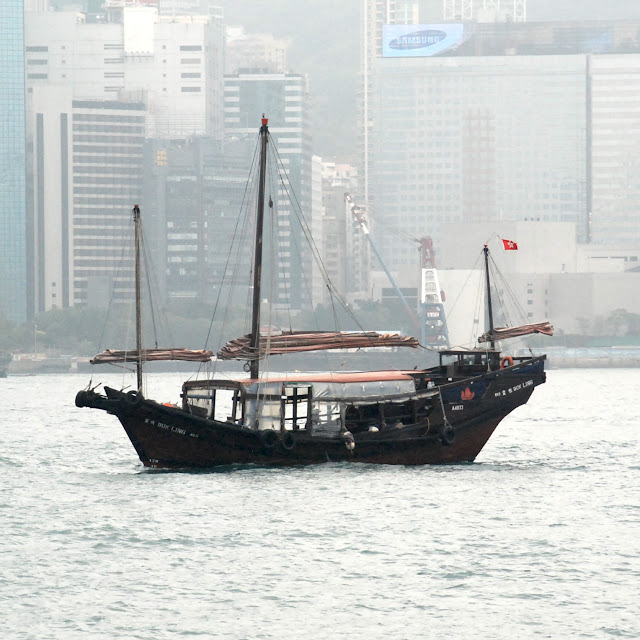 Dukling in Victoria Harbour