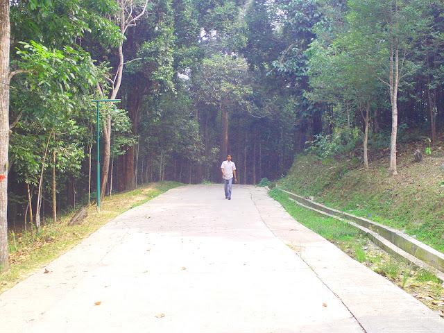 Hutan Tahura (Taman Hutan Raya) ini memilik areal seluas 1500 Ha. Ia terletak dalam kawasan hutan produksi terbatas di Kecamatan Minas, tepatnya pada kilometer 20 jalan raya Pekanbaru-Minas. Di samping sebagai objek wisata alam, hutan ini juga berfungsi sebagai tempat pelestarian flora, fauna dan penelitian ilmiah bagi lingkungan.