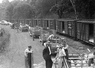 Sheep being sent to market, Russell Co., VA