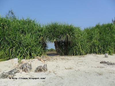 Chhera dip bangladesh