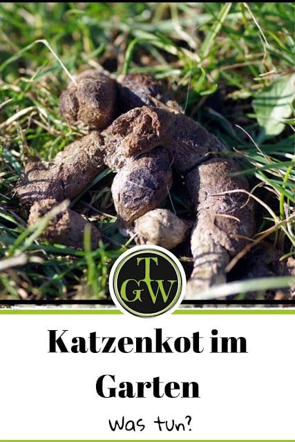 Was tun gegen Katzenkot im Garten?  #katzenkot #garten #fremdekatzen #tierkot #gemüsegarten #blumenbeet
