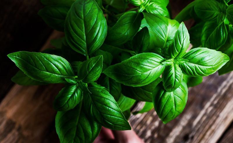 How to Grow Basil to Make the Perfect Pesto