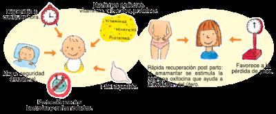 beneficios y propiedades lactancia