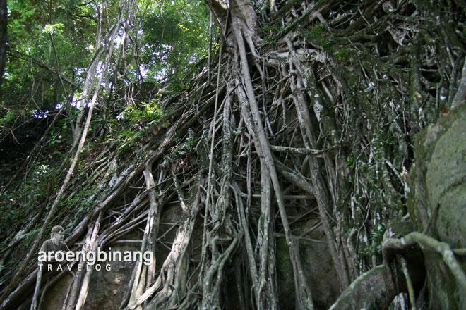 akar pohon tua pantai karang bolong anyer serang