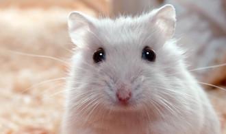 6 Cara Menghilangkan Kutu Hamster Paling Ampuh [Auto Hilang]