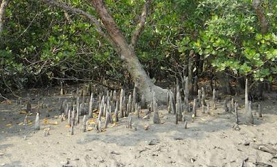 Best National Park in India, Sunderbans National Park, West Bengal