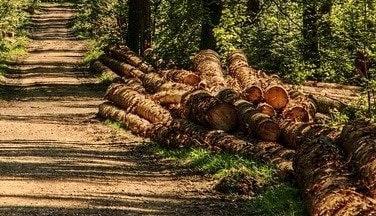 Adapun tujuan pembagian batang kayu dilakukan adalah mengurangi berat kayu, membuang bagian yang tidak bermanfaat, dan pemasaran kayu.