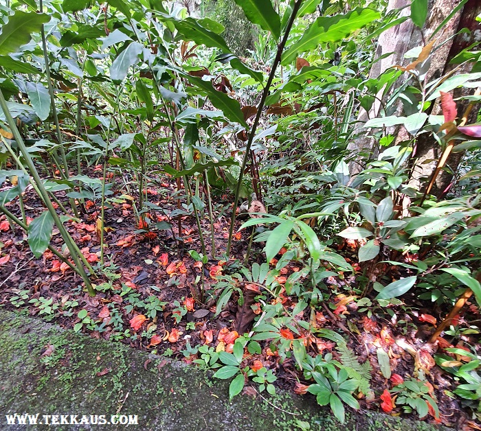 Plants in The Habitat Penang