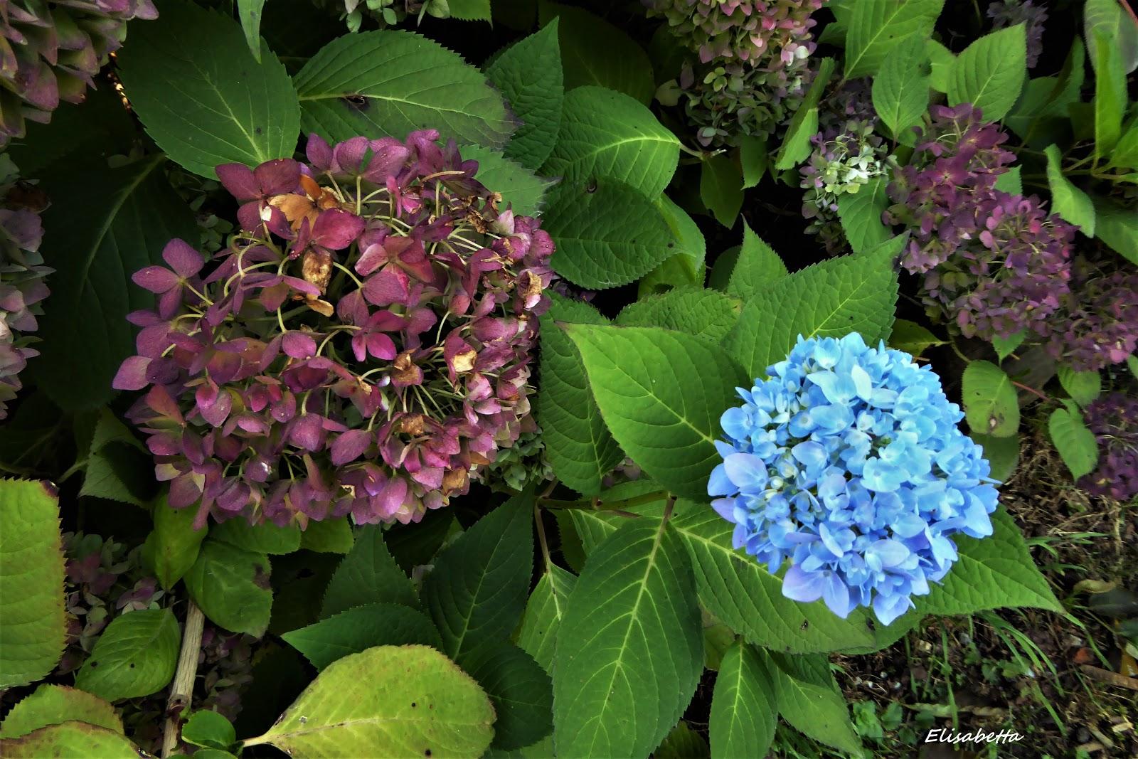 Morgen Ist Alles Anders Die Blaue Hortensie