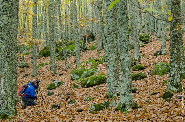 Castañar de El Tiemblo Avila otoño