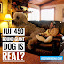 Juji The Giant Dog Is Real?