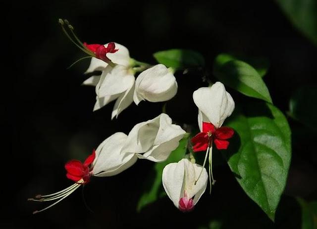 cach trong va cham soc hoa ngoc nu