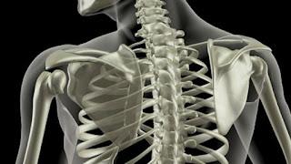 Osteoporose Tem Cura,Osteoporose Sintomas,Osteoporose Tratamento