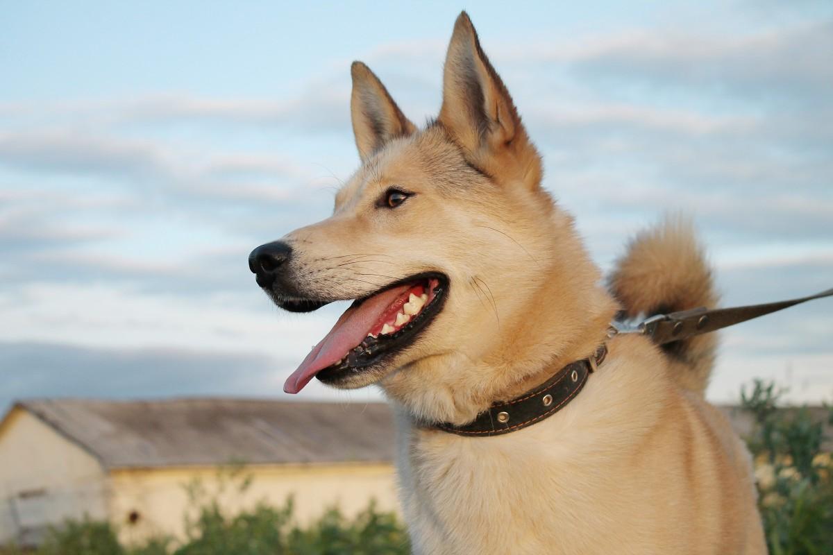 8 предупреждений указывает, что ваша собака испытывает боль