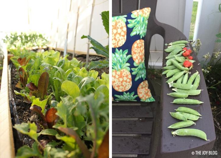 Salad Greens & Freshly Harvested Garden Peas // www.thejoyblog.net