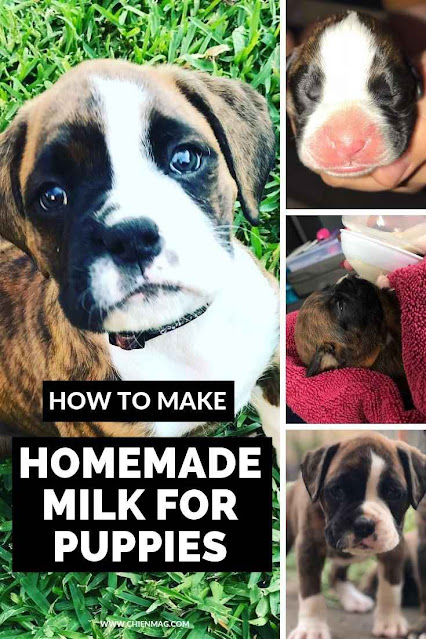 How To Make Puppy Milk Homemade
