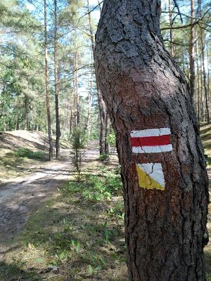 Kampinoska nowość - żółta ścieżka spacerowa wokół Długiego Bagna