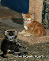 Feral kittens in our care