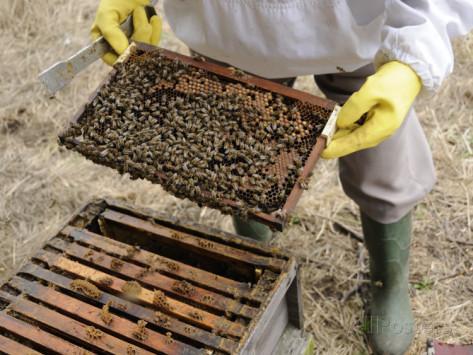 Φθινοπωρινή επιθεώρηση μελισσιού ΒΙΝΤΕΟ