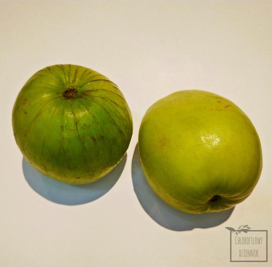 Głożyna omszona (Ziziphus mauritiana) Indian plum Chinese apple owoce egzotyczne z Azji smak wygląd opis pochodzenie uprawa występowanie owoc nasiona
