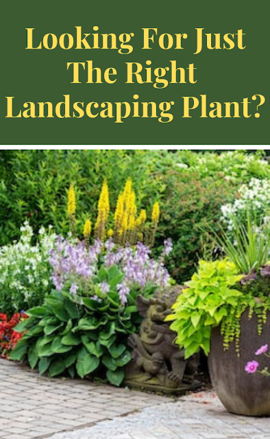 Looking For Just The Right Landscaping Plant