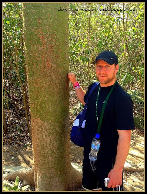 hollow tree Tulum, Mayan sacred tree, Tulum sacred tree