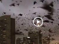 Video: Tiba-tiba Ribuan Burung Hitam Bersuara Menakutkan Menyerbu Texas, Pertanda Apa?