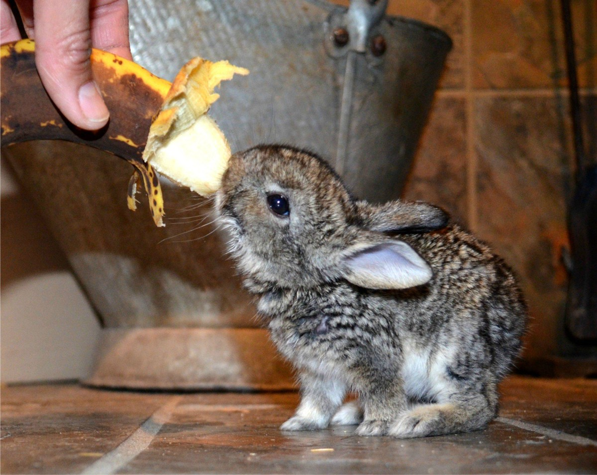 Cute Bunny Pictures That Will Make You Say Aww 30 Pics Amazing Creatures