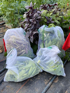 Bags of Food with Basil