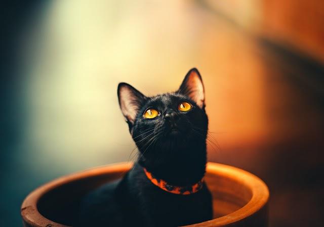 Comment apprendre à un chat à utiliser la litière?