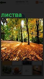 Осенний парк, светит солнце и желтая листва с деревьев опала на землю