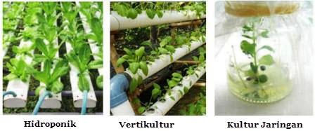 Keuntungan Teknologi Reproduksi pada Tumbuhan dan Hewan