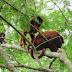 Belezas da Natureza, imagens da fauna nos arredores de Ji-Paraná