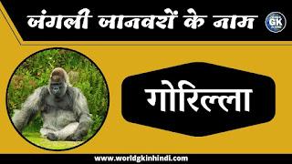 Gorilla Animal Name In Hindi