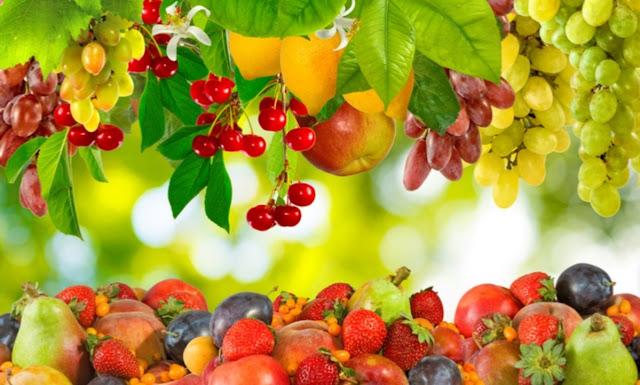 Usaha Agrobisnis, Peluang Usaha Rumahan dengan Keuntungan Berlipat