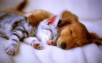собака и кот во сне