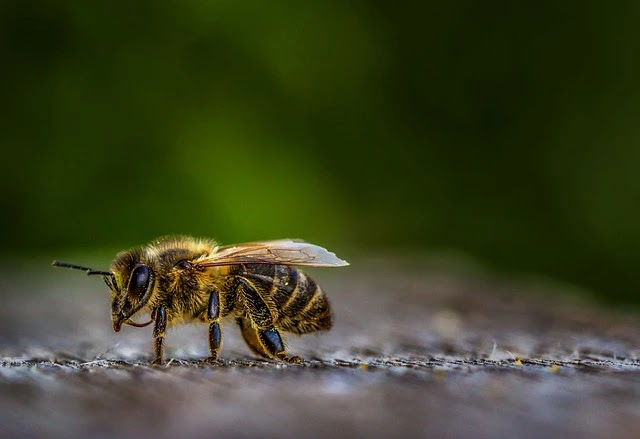How to get rid of bees at home