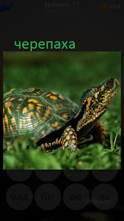 389 фото ползет обычная черепаха 11 уровень
