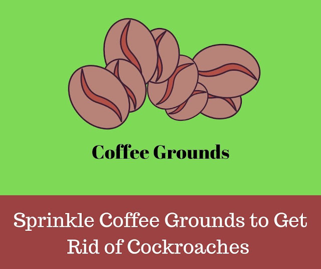 how to get rid of roaches overnight with Coffee Grounds