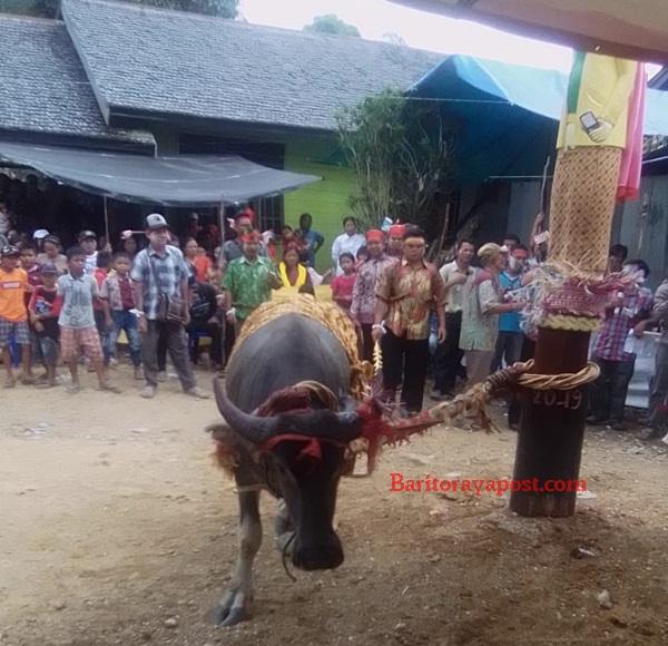 "Ritual Tiwah ""Tabuh ke 3"" di Marapit: Keluarga Masukkan Tulang Ke Sandung"