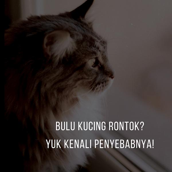Penyebab Bulu Kucing Rontok dan Bahayanya bagi Kesehatan